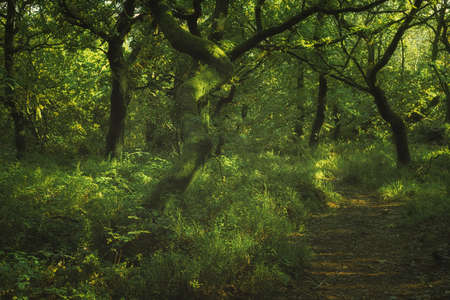 Swineholes wood. Vibrant green moody, ethereal UK forest woodland trees, and foliage with a shallow depth of field.