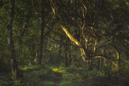 Creswells Piece. Vibrant green moody, ethereal UK forest woodland trees, and foliage with a shallow depth of field.