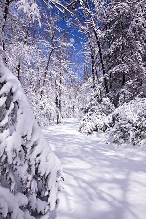 blanketed: Snowy Road Stock Photo