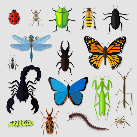 Set of various insects design flat. Ilustrace