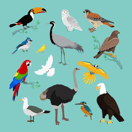 Colección de varios pájaros de diseño plano. Los pájaros que vuelan, búho y animales, vector del pájaro, salvaje águila, carácter y flora, la fauna y el vuelo, tucán y la ilustración de la zoología Ilustración de vector