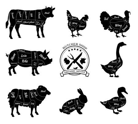 Carnicería: Establecer una vista esquemática de animales de carnicería. Vectores