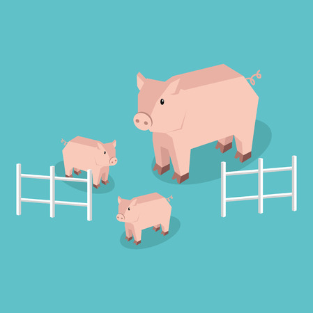 pigling: Isometric pig with piglets isolated. Pig family animal farm with litttle piglet, funny drawing livestock farm boar or big swine, 3d funny cute pig with pigling stand near fence. Vector illustration