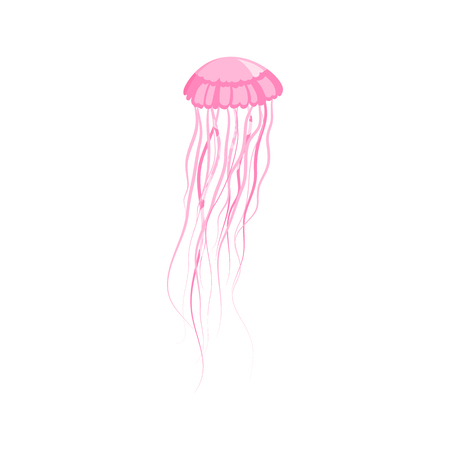 floating in water: Pink jellyfish floating in space. Gelatinous pink jellyfish with long tentacles isolated on white background. Marine creature floating in the water. Inhabitant of underwater world. Vector illustration