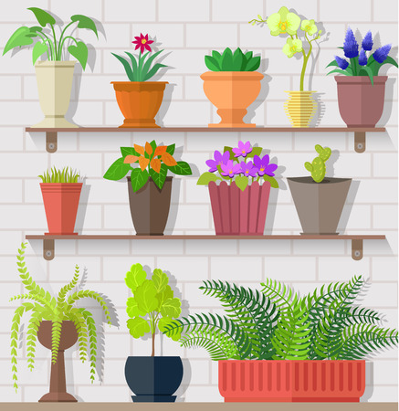 plant pot: Houseplant set design flat concept. Houseplant and house plant, plant pot isolated, indoor plants, flower and green nature, leaf and pot set, gardening growth, vector illustration