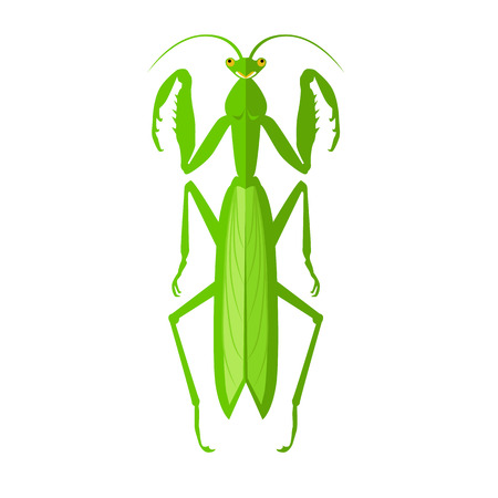 hopper: Nature green cartoon locust and cute flat grasshopper icon. Wild creature antenna invertebrate cute grasshopper agricultural zoo large green locust nature insect flat vector illustration Illustration