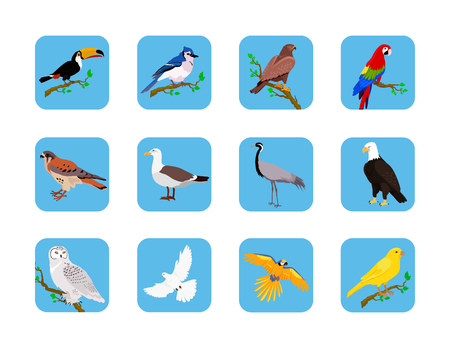 zoology: Collection of various birds flat design. Birds flying, owl and animals, bird vector, eagle wild, wildlife character, fauna and flying, toucan and zoology illustration