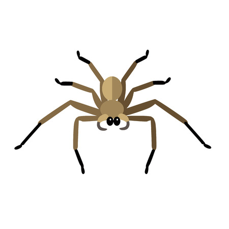 poison fang: Spider icon logo isolated on white background