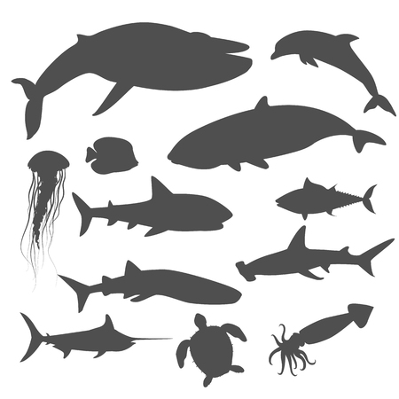 aquatic: Marine fauna set of aquatic animals. Aquatic fauna, ocean or sea fish wildlife fauna, underwater aquarium exotic life fauna, dolphin water wild vector illustration isolated on white