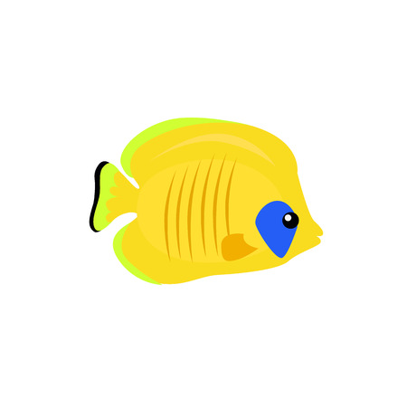 chaetodon: Chaetodon larvatus ocean fish icon. Beautifully painted fish living in ocean or sea with tail and fin. Creating living under water with a yellow color isolated on white background. Vector illustration