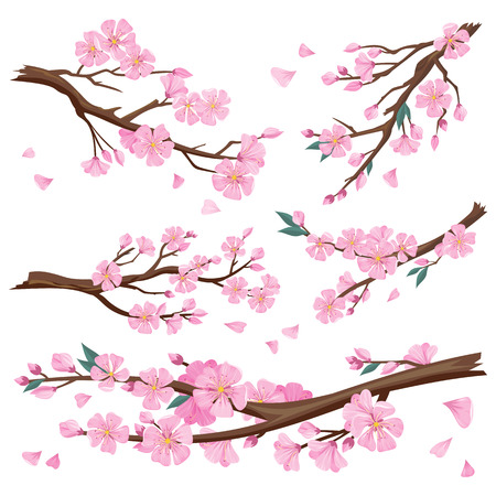 Set of realistic sakura japan cherry branch with blooming flowers. Nature background with blossom branch of pink sakura flowers. Template isolated on white background. Vector illustration Ilustracja