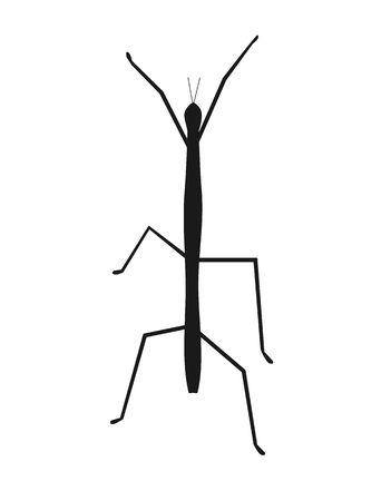 stick insect: Stick insect or phasmids or ghost insects or walking sticks isolated on white. Stick-bugs engraved vector illustration Illustration