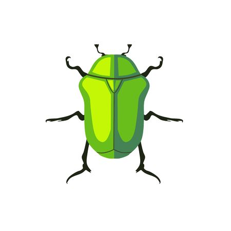 creep: Protaetia may bug insect design flat. Small insect chafer with black legs and antennae and bright green wings folding in the shell. Wildlife creating isolation on white background. Vector illustration