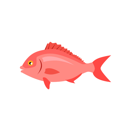 tail fin: Sea fish in pink color isolated. Beautiful fish with a tail fin and flat style design. Water fauna animals live underwater in the ocean or the sea isolated on white background. Vector illustration