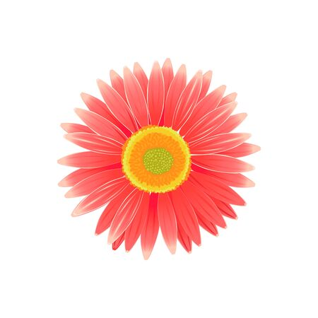 flora vector: Beauty flower design flat style isolated. Blooming red flower with big beautiful petals, summer or spring nature floral plant and graphic blossom exotic natural flora, vector illustration