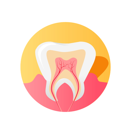 root canal: Icon of the tooth in a cut isolated on white background. Health tooth and dental healthy care, medicine human and design sign oral anatomy, nerve canal and root in tooth single, vector illustration