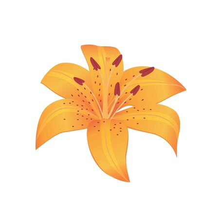 flora vector: Beauty flower design flat style isolated. Blooming orange flower with big beautiful petals, summer or spring nature floral plant and graphic blossom exotic natural flora, vector illustration
