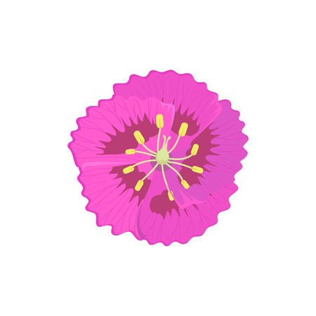 flora vector: Beauty flower design flat style isolated. Blooming pink flower with big beautiful petals, summer or spring nature floral plant and graphic blossom exotic natural flora, vector illustration