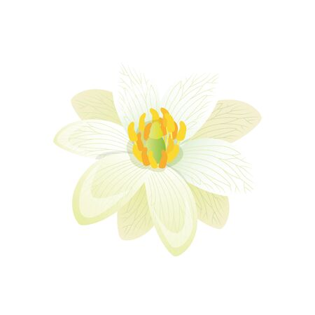 flora vector: Beauty flower design flat style isolated. Blooming white flower with big beautiful petals, summer or spring nature floral plant and graphic blossom exotic natural flora, vector illustration Illustration