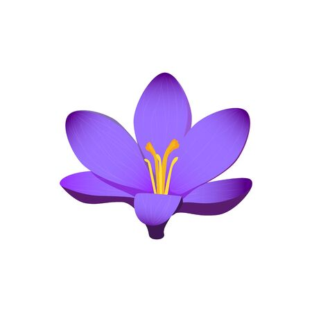 flora vector: Beauty flower design flat style isolated. Blooming blue flower with big beautiful petals, summer or spring nature floral plant and graphic blossom exotic natural flora, vector illustration