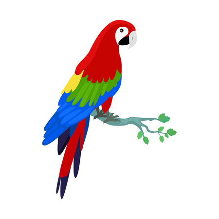 specie: Ara parrot vector. Birds of Amazonian forests in flat design illustration. Fauna of South America. Beautiful Ara parrot on branch posters, childrens books illustrating. Isolated on white. Illustration
