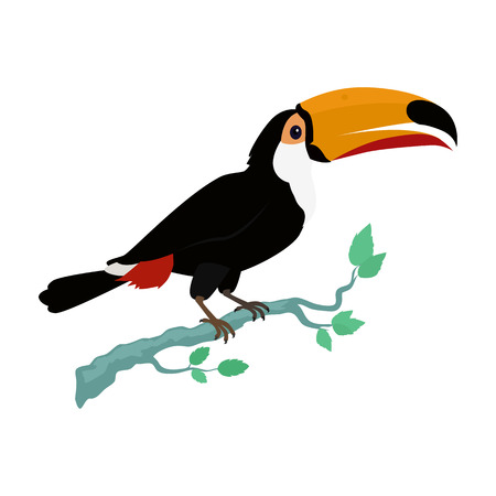 tropics: Toucan vector. Animals of rainy Amazonian forests in flat design. Fauna of South America. Wild life in tropics concept for posters, childrens books illustrating. Toucan on branch isolated on white.