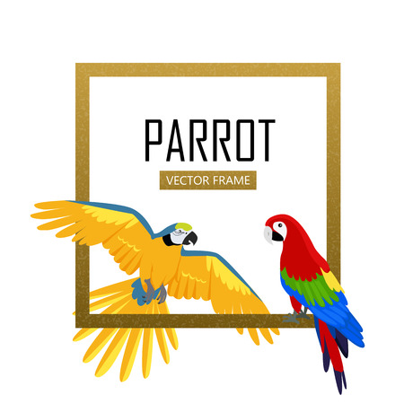ara: Ara parrot vector frame. Birds of Amazonian forests in flat design illustration. Fauna of South America. Beautiful Ara parrots for icons, posters, childrens books illustrating. Isolated on white. Illustration
