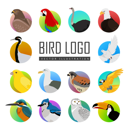 pigeon owl: Big set of birds vector  . Collection of fauna icons for illustrating animal theme. Parrot, ara pigeon hawk eagle toucan, ostrich, kingfisher, gull, owl, jay, falcon, crane, isolated on white. Illustration
