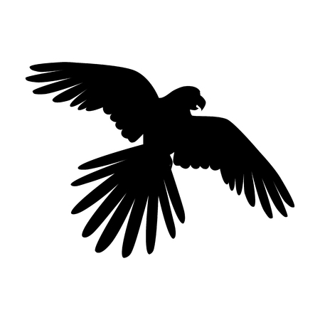 specie: Ara parrot vector. Birds of Amazonian forests in flat design illustration. Fauna of South America. Flying black Ara parrot for icons, posters, childrens books illustrating. Isolated on white. Illustration