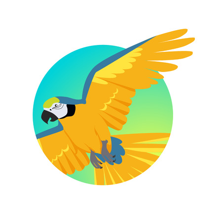 ara: Ara parrot vector. Birds of Amazonian forests in flat design illustration. Fauna of South America. Flying colorful Ara parrot for icons, posters, childrens books illustrating. Isolated on white. Illustration