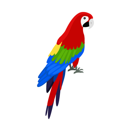 Ara parrot vector. Birds of Amazonian forests in flat design illustration. Fauna of South America. Beautiful Ara parrot on branch posters, childrens books illustrating. Isolated on white.  イラスト・ベクター素材