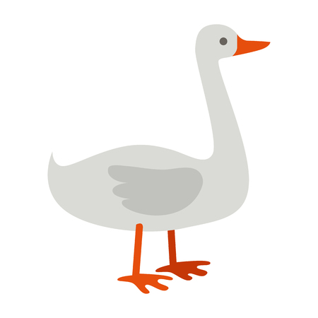animal husbandry: Goose illustration. Vector in flat style design. Domestic animal. Country inhabitants concept. Picture for farming, animal husbandry, meat production companies. Isolated on white background. Illustration