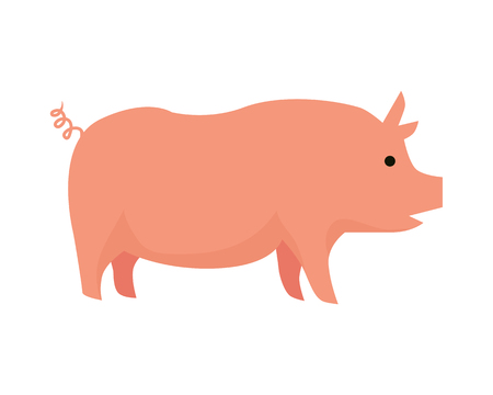 animal husbandry: Pig illustration. Vector in flat style design. Domestic animal. Country inhabitants concept. Picture for farming, animal husbandry, meat production companies. Isolated on white background.