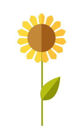 oil crops: Sunflower  vector. Flat design. Traditional agricultural plant. Illustration for organic farming, industrial growing companies, grocery shops ad, logo element, icons, infographics.