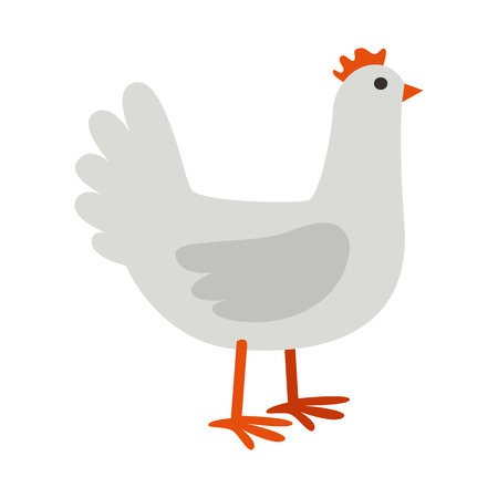 animal husbandry: Hen illustration. Vector in flat style design. Domestic animal. Country inhabitants concept. Picture for farming, animal husbandry, meat and feather production  companies. Isolated on white background.
