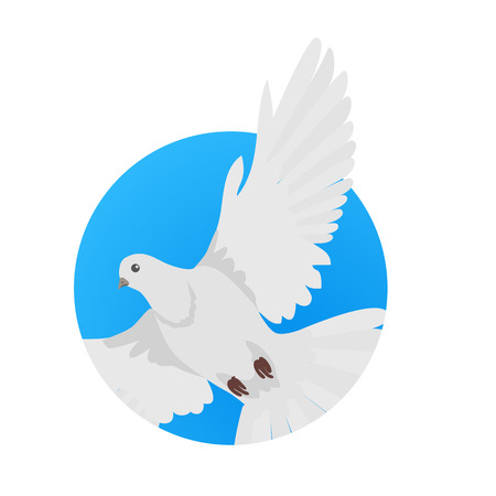 specie: Pigeon vector. Religion, wedding, peace, pacifism, concept in flat design. Illustration for religion attributes, childrens books illustrating. White pigeon flying wings spread isolated on white.