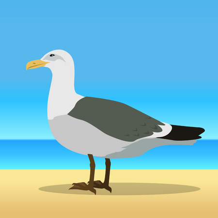 sea bird: Gull vector. Sea bird wildlife in flat style design. Illustration for prints, vacation advertising, childrens books illustrating. Beautiful Seagull bird seating on sandy sunny beach.