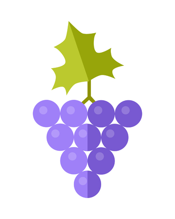 grape fruit: Grape vector in flat style design. Fruit illustration for conceptual banners, icons, mobile app pictogram, infographic, and  element. Isolated on white background.
