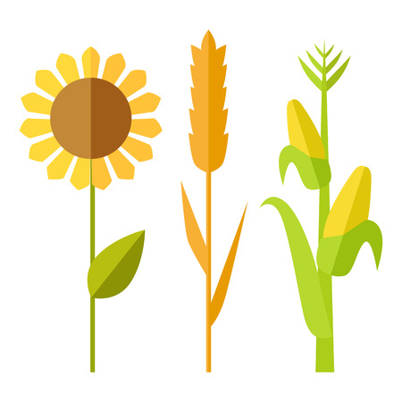 ヒマワリ、小麦、トウモロコシのベクトル。フラットなデザイン。伝統的な農業植物。有機農業は、産業成長企業、食料品店の広告、要素、インフ