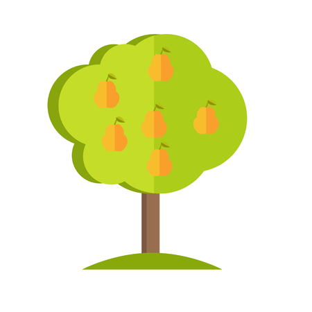 plant tree: Pear tree with fruits icon. Vector illustration in flat style design. Plant pattern for environment, gardening, farming, business growing concepts. Isolated on white background. Illustration