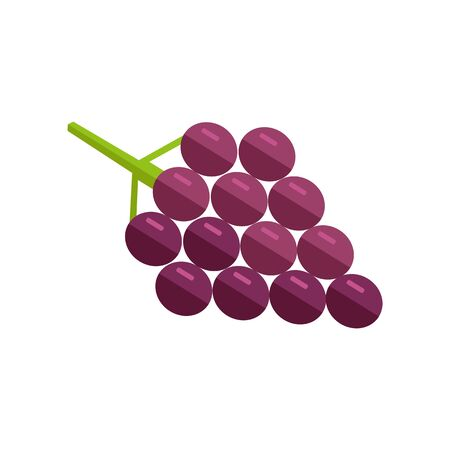 grape fruit: Grape vector in flat style design. Fruit illustration for conceptual banners, icons, mobile app pictogram, infographic, and logotype element. Isolated on white background.
