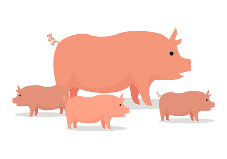 animal husbandry: Pig with piglets llustration. Vector in flat style design. Domestic animal. Country inhabitants concept. Picture for farming, animal husbandry, meat production companies. Isolated on white background.