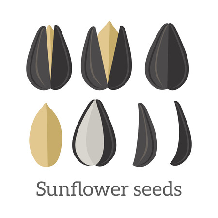 isolated ingredient: Sunflower seeds vector in flat style design. Traditional raw, salty, fried snack, diet product, culinary ingredient, source of vitamins, elements, fatty acids and oil. Isolated on white background. Illustration