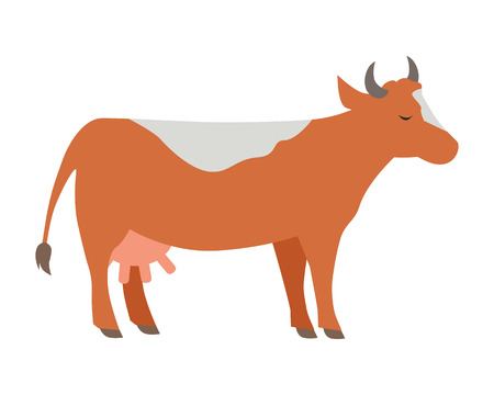 animal husbandry: Cow illustration. Vector in flat style design. Domestic animal. Country inhabitants concept. Picture for farming, animal husbandry, milk production companies. Isolated on white background. Illustration