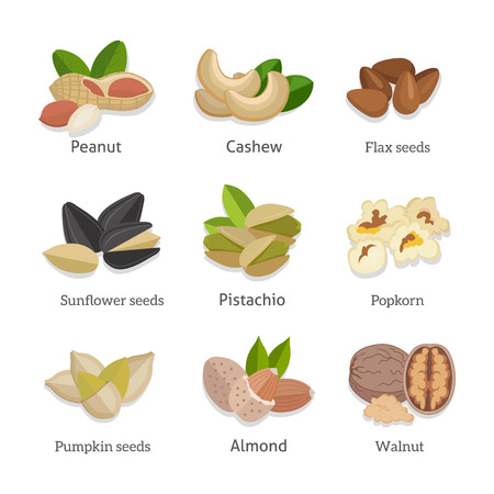 nutshell: Set of seeds and nuts vector. Flat design. Collection of traditional snacks. Walnut, cashew, pistachio, peanut, almond, popcorn, sunflower, pumpkin flax seeds illustrations Isolated on white