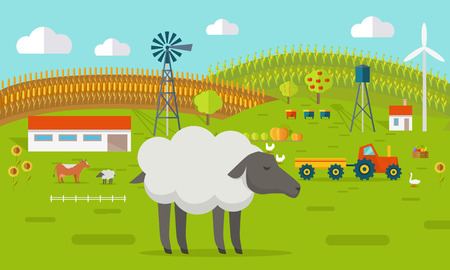 farmyard: Farmyard vector illustration. Flat design. Sheep standing against the farm landscape, tractor, cow, fields on background. Organic farming concept. Traditional agriculture. Modern ecological farm.