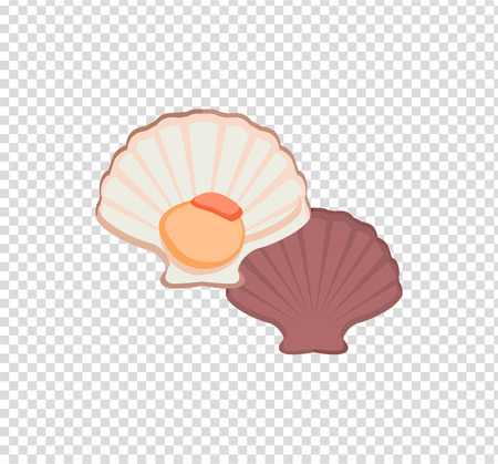 deepsea: Oysters in colour variant. Seafood concept icons in flat style design. Vector illustration fresh deep-sea oyster. Beautiful shell pearl mussels.