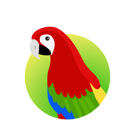 Ara parrot vector. Birds of Amazonian forests in flat design illustration. Fauna of South America. Beautiful Ara parrot on branch posters, childrens books illustrating. Isolated on white. Illustration