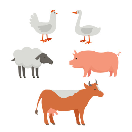 animal husbandry: Set of domestic animals illustrations. Vector in flat style design. Country inhabitants concept. Picture for farming, animal husbandry, milk, meat and wool production companies. Isolated on white. Illustration
