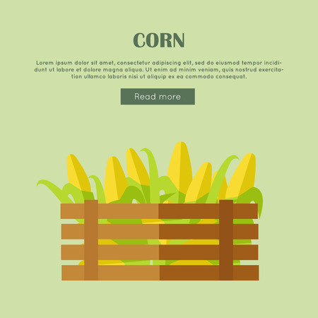 Corn vector web banner. Flat design. Illustration of wooden box full of fresh and ripe cereals on color background for grocery shop, farm, agricultural company web page design. 向量圖像